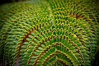 Closeup of a green tropical fern