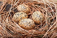 Speckled bird eggs in a grass nest