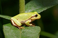 green frog sitting on leaf in forest