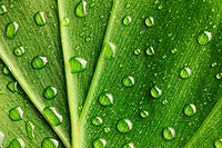 Beautiful water drops on a leaf close_up