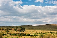 beauty, African, afternoon, Masai Mara, Kenya, clouds, Africa