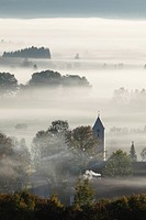 Germany, Bavaria, Zell, View of tree in fog