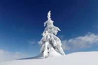 Austria, Styria, View of snow covered firs on Gasslhohe mountain