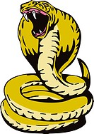 illustration of a King Cobra about to attack