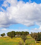 Magnificent cumulus clouds in the high spring sky. A bright field with green trees
