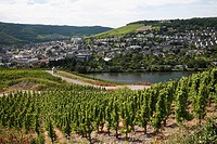 View over the Mosel River towards Kues, Bernkastel_Kues, Rhineland_Palatinate, Germany, Europe