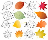 Set of leaves. Color and outline vector illustrations