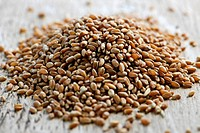 Closeup on pile of organic whole grain wheat kernels