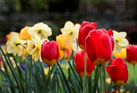 Colorful spring flowers announce the season.