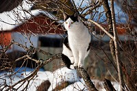 black and white cat on the tree in winter