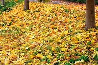 Colourfull autumn leaves lying on the grass