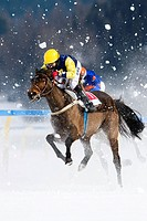 Horse racing, White Turf in St. Moritz, flat race, Eduardo Peroza on Kazoma Kate, St. Moritz, Graubuenden or Grisons, Switzerland Europe