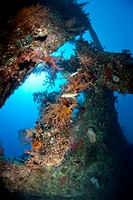Stern and propeller of the Dunraven shipwreck, now an artificial coral reef. Beacon Rock, Red Sea, Egypt.