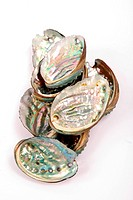 Natural beauty of the abalone shell light