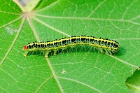 a cute caterpillar on leaf in the summer