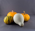Pumpkin is a gourd_like squash of the genus Cucurbita and the family Cucurbitaceae which also includes gourds