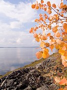 Photo of a sea landscape in the autumn