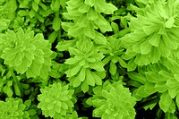Photo of leaves of a green juicy plant