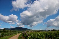 Vineyards with summer clouds in Alsace, France