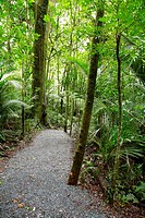 Walking trail in lush green tropical forest