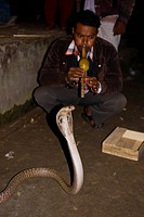 Snake charmer in Ghuardia, a village where people are supposed never to be bitten by snakes, Bangladesh, Asia