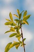Green leaf on sunlight in anture