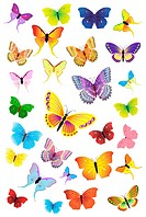 Butterflies Party