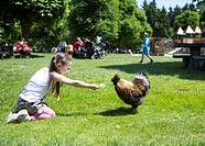 Three-year-old girl feeding a chicken in a meadow, Wildpark Poing wildlife park, Bavaria, Germany, Europe