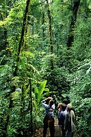 A family and their naturalist guide spotting birds in the cloud forest canopy, Monteverde Cloud Forest Reserve, known for its incredible biodiversity,...