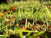 into grass