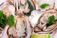 Close_up view of oysters