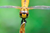 A dragonfly close_up shot