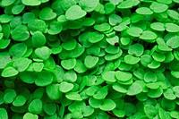 frische grüne Triebe