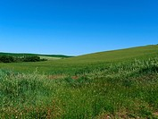The landscape of the Val d'Orcia. Tuscany