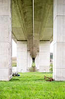 Directly below view of a concrete flyover with green grass