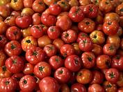 studio shoot, tomato
