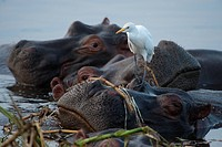 Queen Elizabeth National Park, Uganda.