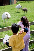Two children looking at ostriches on a visit to a city farm,