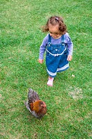 Little girl chasing a chicken on a visit to a city farm