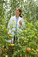 Woman looking up at tomato plants in greenhouse