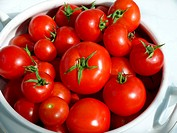 red tomatoes from organic farming