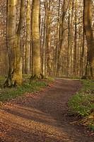 Forest trail, Harz District, Harz, Saxony_Anhalt, Germany / Waldweg, Landkreis Harz, Harz, Sachsen_Anhalt, Deutschland
