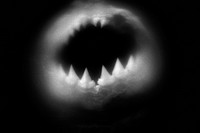 Animal Jaws