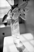 Flower in Vase on Kitchen Table