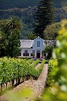 View onto the vineyards and manor house of Buitenverwachting Winery, Constantia, Cape Town, Western Cape, South Africa, RSA, Africa