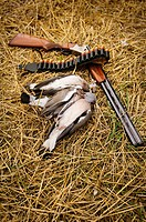 Rifle and dead pigeon on grass