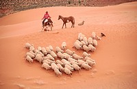 Navajo Shepherd Gathering Herd of Sheep