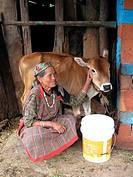 Old Woman with calf, Manali, Himachal Pradesh, India / Bäuerin mit Kalb, Manali, Himachal Pradesh, Indien