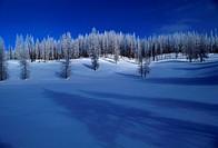 Trees by Frozen Lake