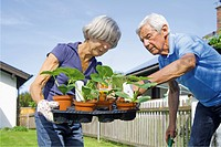 Germany, Bavaria, Senior couple with tray of seedlings in garden